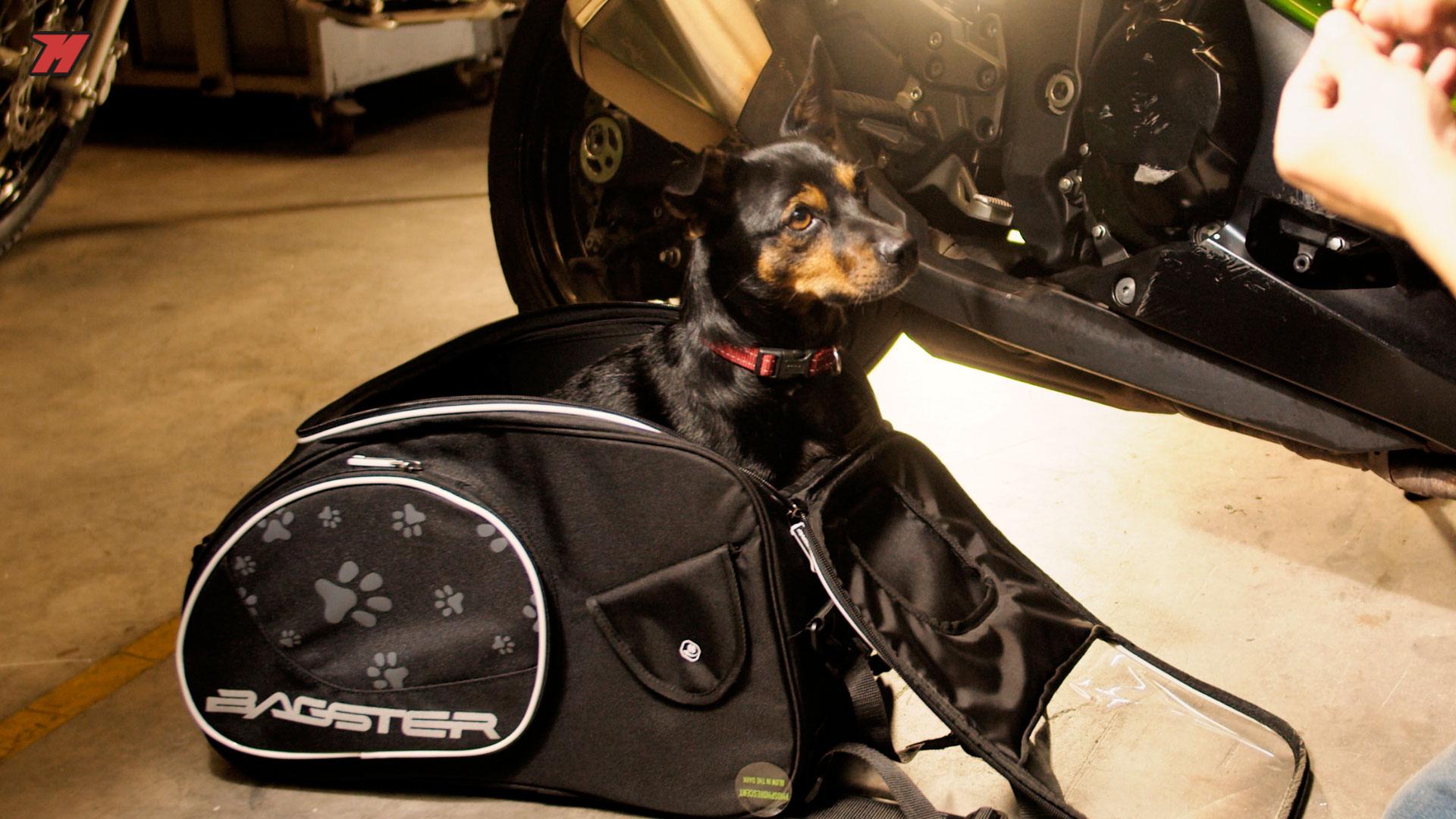Bolsa sobredepósito para moto para tu perro o gato.
